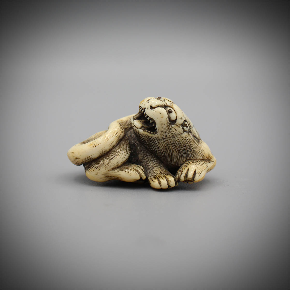Ivory netsuke of a recumbent male tiger, Tomotada, MR3152_v1